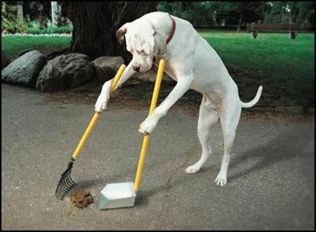 LEO tegen  herinvoering hondenbelasting